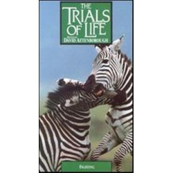 The Trials of Life: Fighting (VHS)