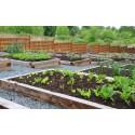 Plant Food & Soil